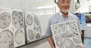 خلیوں میں ری سائیکلنگ کا نظام دریافت کرنے پر طب کا نوبل انعام جاپانی سائنسدان کے نام