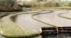 استعمال شدہ پانی میں کائی یا الجائی اگائیے اور بایوفیول تیار کرکے ایندھن کا مسئلہ حل کیجیے