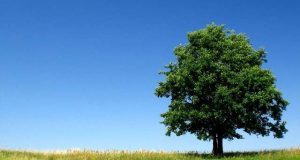 ایک درخت بھی ماحول کے لیے ضروری جانداروں کو بڑھا سکتا ہے، تحقیق