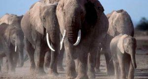 'دنیا میں جنگلی حیات میں 40 سالوں میں 58 فیصد کمی'