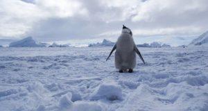 انٹارکٹکا میں بحیرۂ راس کو مکمل تحفظ دینے پر اتفاق