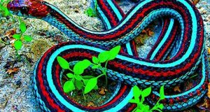 سانپ کے زہرسے درد اورتکلیف دورکرنے میں نئی کامیابیاں