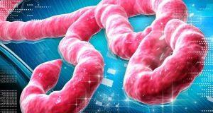 ایبولا وائرس کی ویکسین تیار