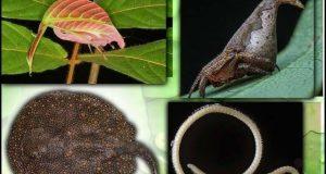 رواں سال دریافت ہونے والے نئے کیڑے مکوڑے اور پودے