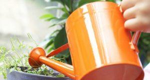 پیاسے پودے پانی کی آواز سن سکتے ہیں