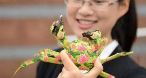 چین میں کیکڑوں کا دلچسپ فیشن شو