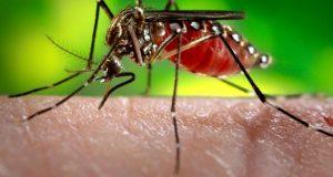 زیکا، ڈینگی اور چکن گونیا پھیلانے والے مچھروں سے نمٹنے کا انوکھا منصوبہ