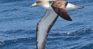 سونگھنے کی حس؛ طویل سفر میں پرندوں کی اضافی رہنما