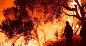 کیلی فورنیا کے جنگلات میں لگی آگ سے 800 مکانات جل کر راکھ