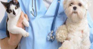 کتے اور بلی کے لعاب میں موجود ہلاکت خیز بیکٹیریا