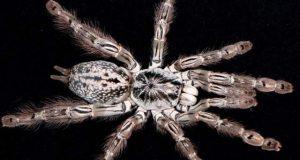 مکڑی کا زہر بچوں کی مرگی کے علاج میں مددگار ثابت