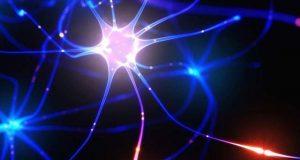انسانی دماغ کا ہرخلیہ ایک چھوٹا کمپیوٹر ہے