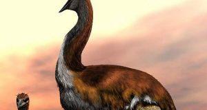 ماہرین نے سب سے بڑے 'ہاتھی پرندے' کا اعلان کردیا