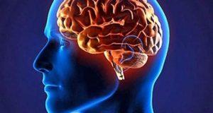 انسانوں کومنفرد بنانے والا اہم دماغی گوشہ دریافت