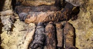 مصر سے 306 قبل مسیح کی حنوط شدہ 50 لاشیں برآمد