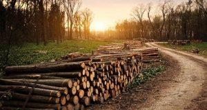 گزشتہ برس تباہ ہونے والے جنگلات کا رقبہ بیلجیئم کے برابر نکلا