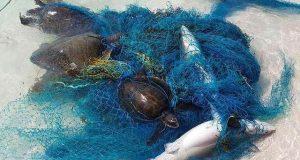 پلاسٹک اور جالوں میں شارک اور دیگر جاندار پھنسنے کے واقعات میں اضافہ