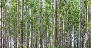 گھنے جنگلات سے عالمی کاربن ڈائی آکسائیڈ کی مقدار میں دو تہائی کمی ممکن
