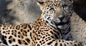 آب و ہوا میں تبدیلی اور جنگلات میں کمی جانوروں کے لیے ہلاکت خیز ثابت ہوگی