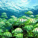 مچھلیاں بھی میوزک بینڈ کی طرح ایک آواز میں گاتی ہیں!