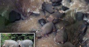 تھائی لینڈ میں ایک دوسرے کو بچانے کی کوشش میں 6 ہاتھی گہری آبشار میں گر کر ہلاک